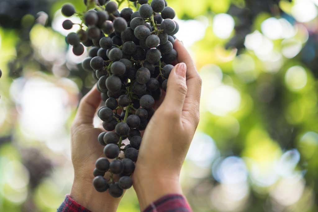 ارزش غذایی انگور سیاه