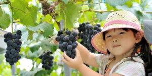 شیره انگور برای کودکان