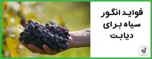 فواید انگور سیاه برای درمان دیابت