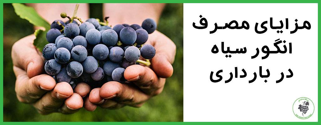 فواید مصرف انگور سیاه در دوران بارداری