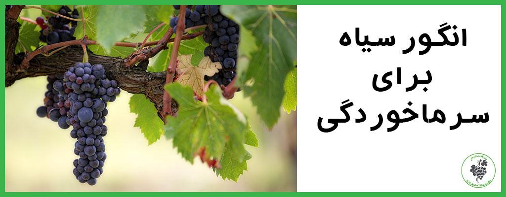 انگور سیاه برای سرماخوردگی
