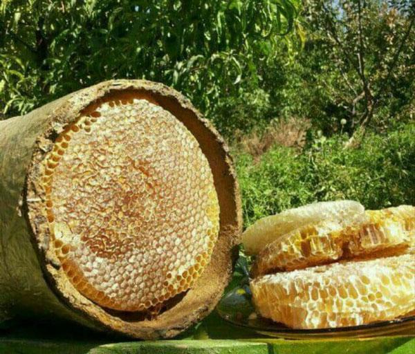 عسل خودبافت در کندو